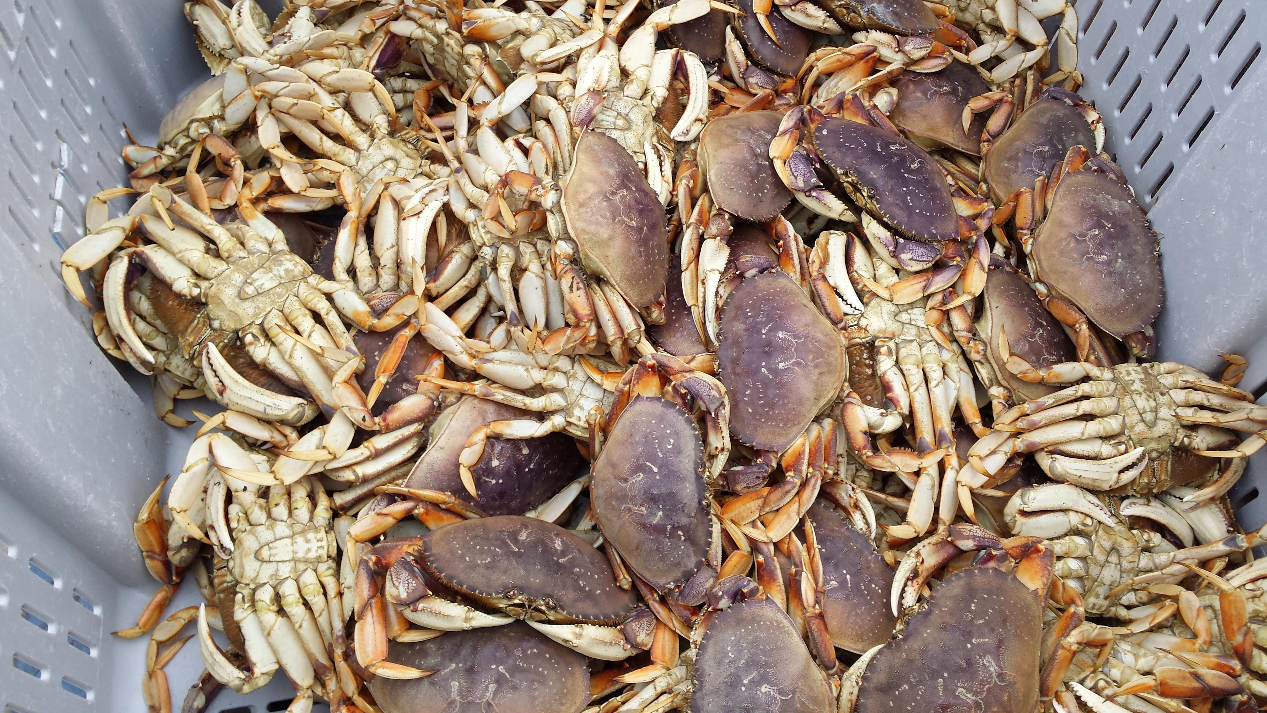 Harbor Crab Wednesday